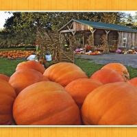 A beautiful fall Sunday to everyone!