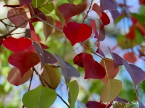 tallow leaves