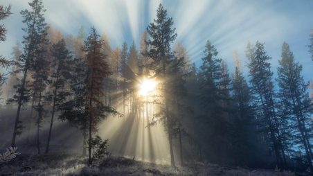 winter-seasons-sunshine-beautiful-splendor-snow-beauty-amazing-twilight-cold-sunsets-forests-morning-cool-sky-sunrays-day-snowy-photography-free-wallpaper-nature-1920x1080