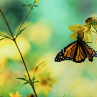 Zen for the Third Trimester of Living